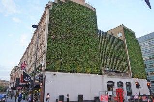 London plant wall